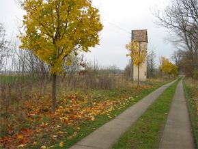 Plattenweg auf Rügen im Herbst